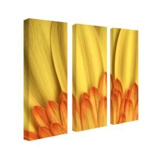 Trademark Fine Art 8 in. x 24 in. Flame by AIANA 3 Piece Canvas Art Set KB007 set