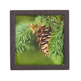 Christmas Evergreen Pine Cone Needles Tree Trees Premium Trinket Boxes