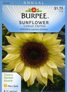 Burpee 38364 Sunflower Lemon Chiffon Seed Packet  Flowering Plants  Patio, Lawn & Garden