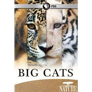 Nature Big Cats Set Nature Movies & TV