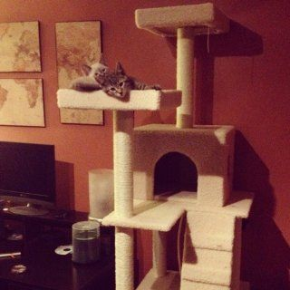 "New 72"" Large Cat Tower Tree with Condo House Scratcher Post with US Warranty  Scratching Post"