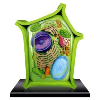 John N. Hansen 4D Science Plant Cell Anatomy Model