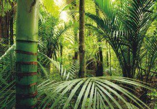 Fototapete Tapete Natur Dschungel Wildniss Pflanzen Foto 360 cm x 270 cm Baumarkt