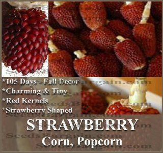 RED STRAWBERRY POPCORN Corn seeds   DECORATIVE PRETTY MAIZE   mahogany red kernels   105 Days (0015 Seeds   15 Seeds   Pkt.): Electric Popcorn Poppers: Kitchen & Dining