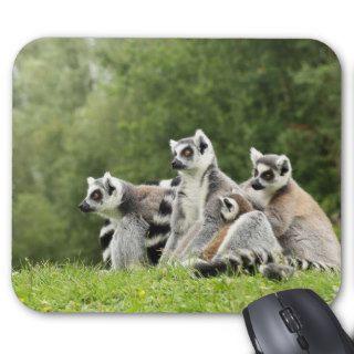 funny ringtailed lemur scene photo  mousepad