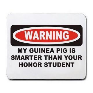 MY GUINEA PIG IS SMARTER THAN YOUR HONOR STUDENT Mousepad : Mouse Pads : Office Products