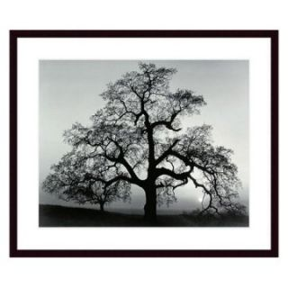 Oak Tree Sunset City California by Ansel Adams Framed Wall Art   Photography