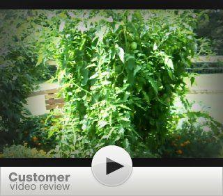 Vertical Vegetable Gardening: A Living Free Guide (Living Free Guides): Chris McLaughlin: 9781615641833: Books