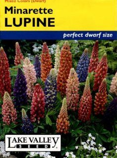 Lake Valley 450 Lupine Minarette Dwarf Mix Seed Packet : Flowering Plants : Patio, Lawn & Garden