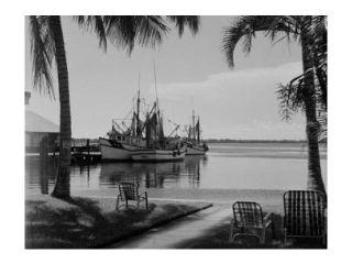 USA, Florida, Fort Meyers, shrimp boats Poster Print (18 x 24)