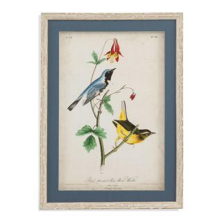 Bassett Mirror Belgian Luxe Black Throated Blue Wood Warbler Framed