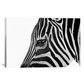 iCanvas Ignoring Zebra by Bob Larson Photographic Print on Canvas; 40 H x 60 W x 1.5 D