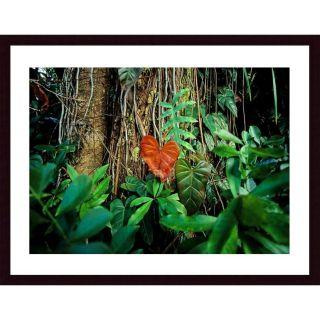 Printfinders Rain Forest by John K. Nakata Framed Photographic Print