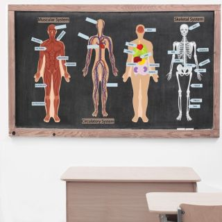 Peel, Play and Learn Human Body Wall Decal Set   17070263