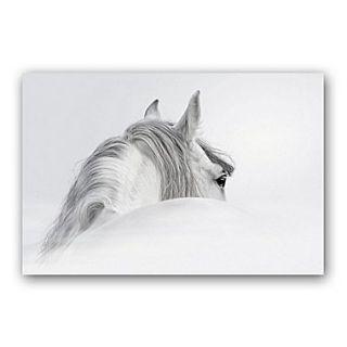 Empire Art Direct Blanco Mare Horse Graphic Art Plaque