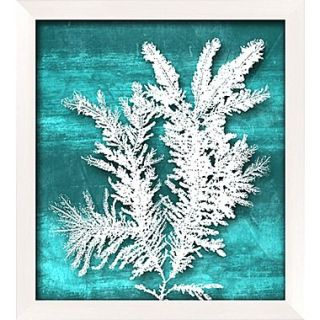 PTM Images Seaweed Gicl e Framed Graphic Art